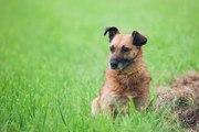 Замечательная собака Римма ждет своего хозяина!