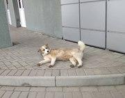 СОБАКА в дар  Ищем дом для молодой собаки,  возраст примерно 6-7 мес. О