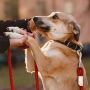 Чудо-собака Веста ищет дом!