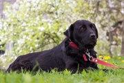 В поисках нового дома удивительная собака по имени Шери (ударение на Ш