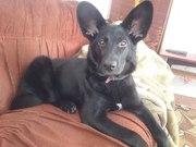 Ищем хозяина для замечательной собаки Мира!!!