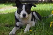 Самый добрый и милый пёс ищет своего хозяина!  Его история похожа на м