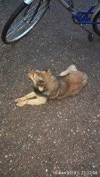 Во дворе дома появилась бездомная собака. На вид около 1-2 лет,  молодо
