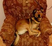 Замечательный пес ищет дом и заботливого хозяина! Рыжий-активен,  полон