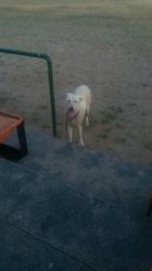 Здравствуйте,  хочу отдать собаку ,  нашёл в аг.Квасовка, был привязан к