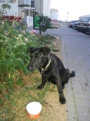 Собачуля ищет старых или новых хозяев !  Была найдена в районе Вишневц
