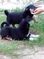 Сегодня на базе подбросили двух щенков (девочки),  месяца 3 им . Ищут з