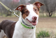 В дар! Марго -- замечательная собака! 3 года
